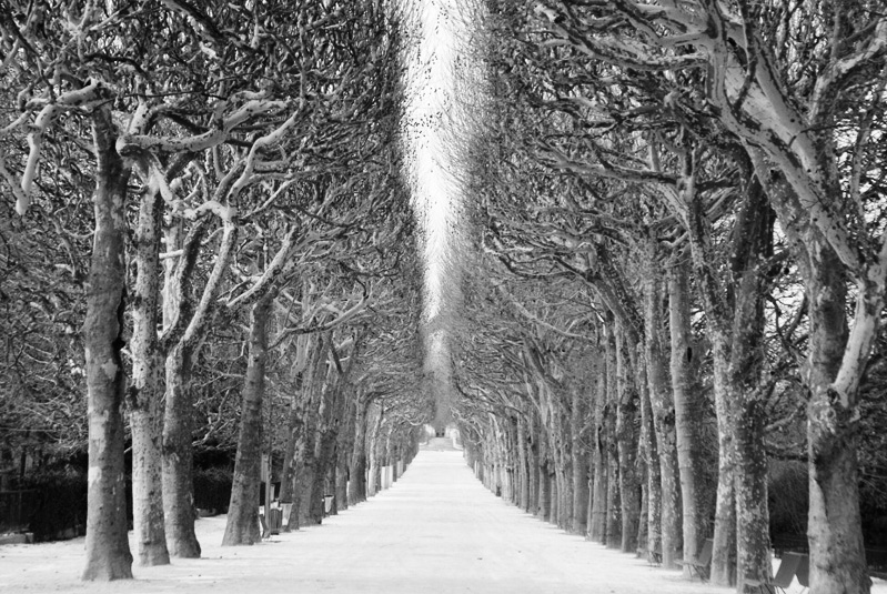 Stanko Abadžic - Trees and Snow (from the Paris Cycle)