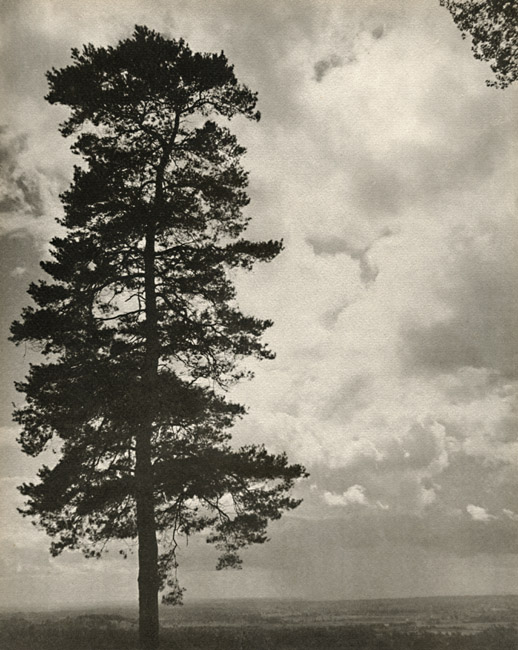 Laure Albin-Guillot - Silhouette of Tree Against Sky