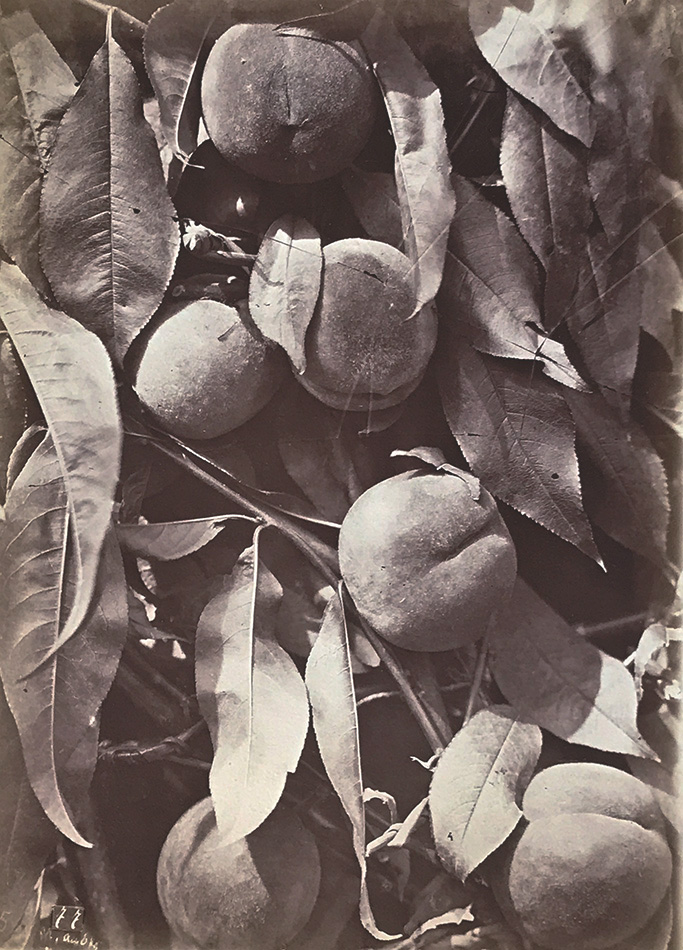 Charles Hippolyte Aubry - Peaches (Pêches) from a Broken Glass Negative