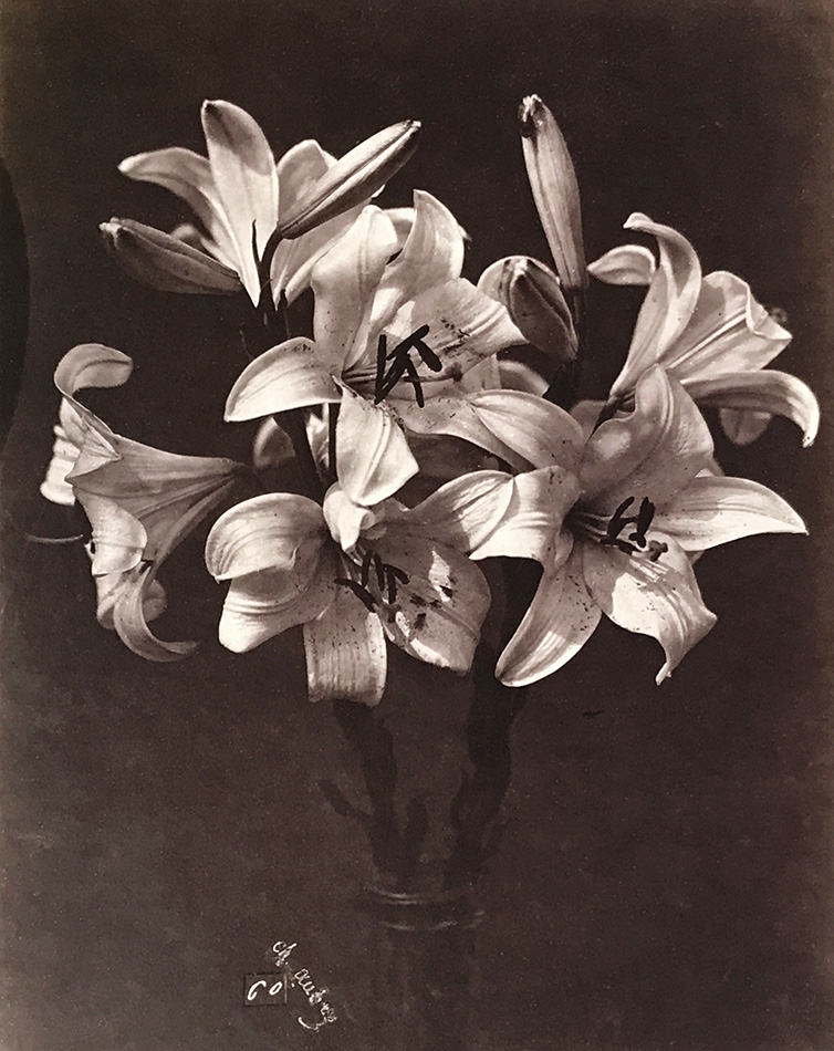 Photo Exhibit | Detail | Charles Hippolyte Aubry - Lilies in Glass Vase
