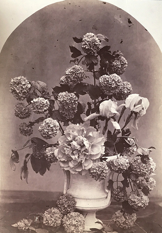 Charles Hippolyte Aubry - Arrangement of Snowball Hydrangeas, Peonies and Irises