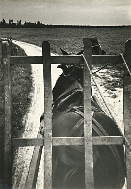 Ilse Bing - Horse Pulling Champagne Grapes