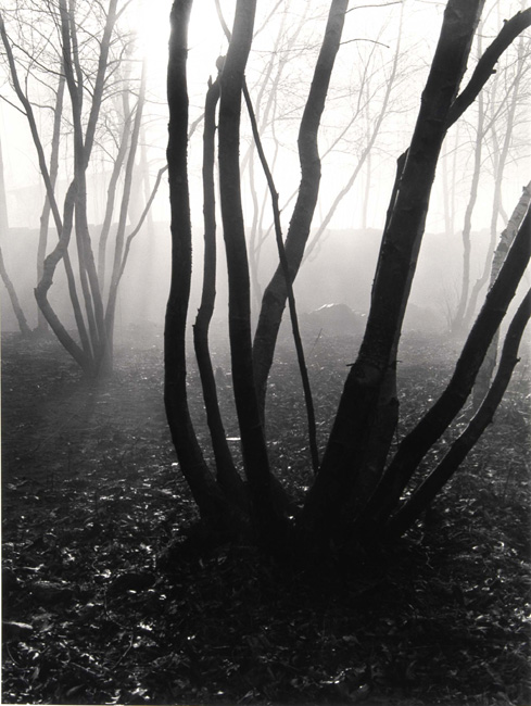 Barbara Morgan - Trees in Fog
