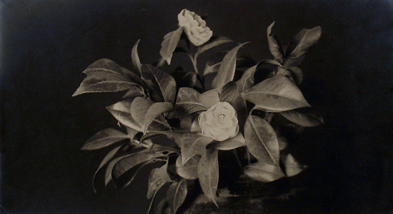 Anonymous (Tokyo Archive) - Still Life - Roses