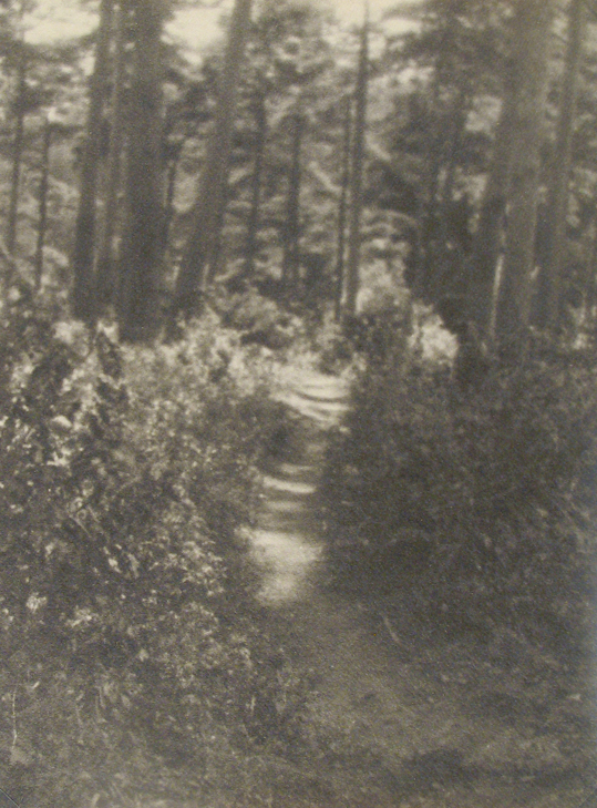 Anonymous (Tokyo Archive) - Path Through Woods