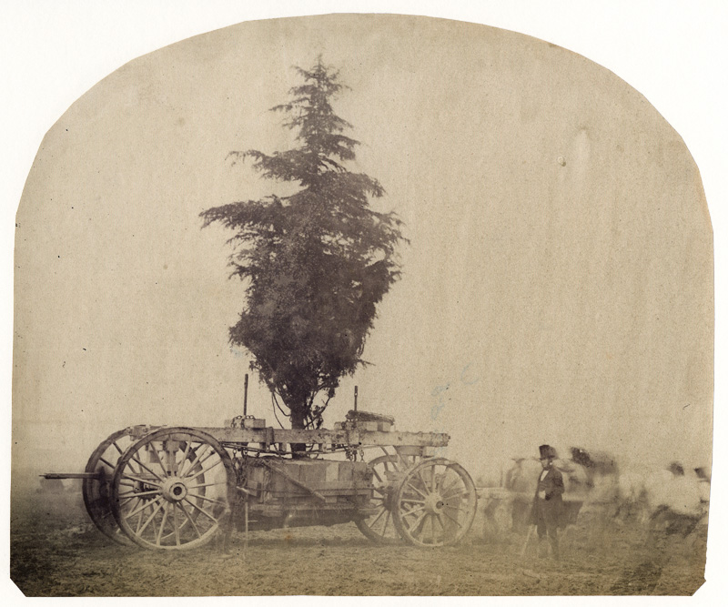 Anonymous - Transporting a Tree by Wagon, 1862 International Exhibition at South Kensington